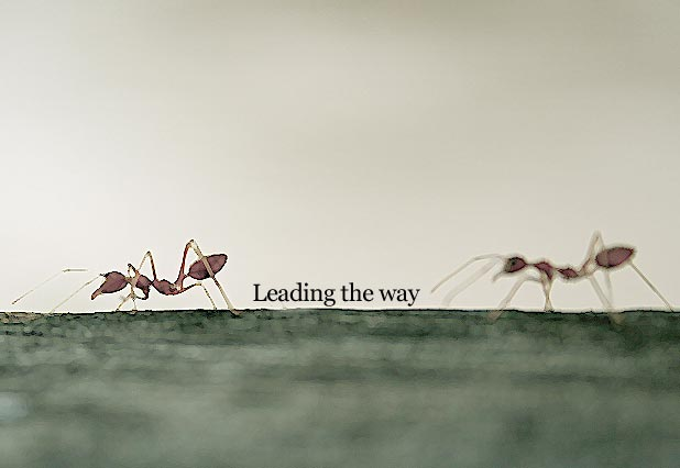 Leading the way -MarketExpress
