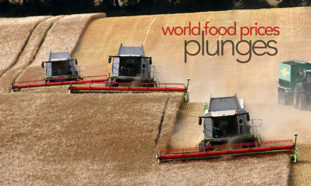 world-food-price-plunges-marketexpress-in