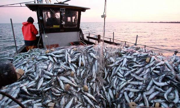 fish-microplastic-marketexpress-in