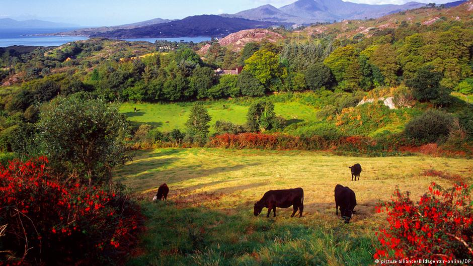 Irish cow burps counteract fossil fuel divestment