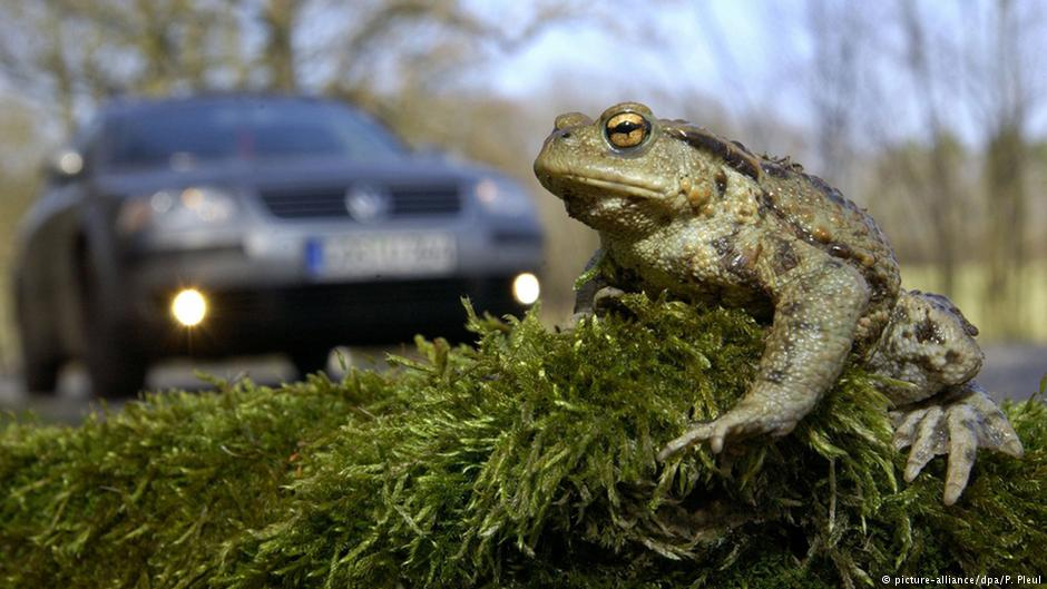 Why did the toad cross the road?