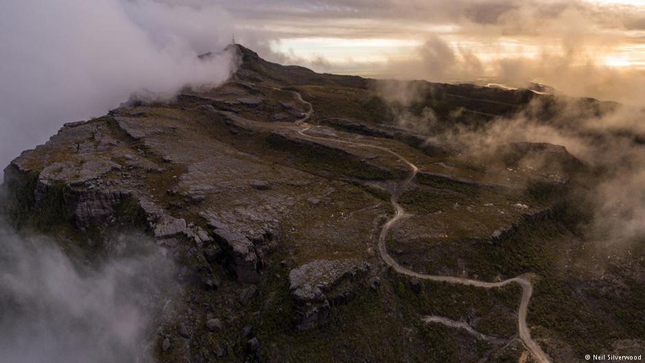 coal-kiwis-newzealand-marketexpress-in