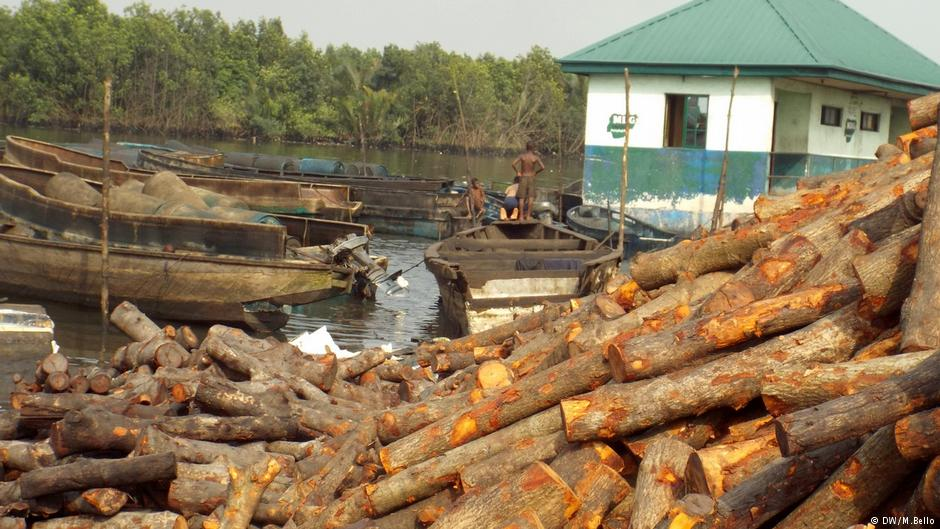 charcoal-africa-logging-marketexpress-in